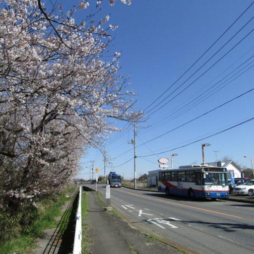 花冷えの桜と新京成バス